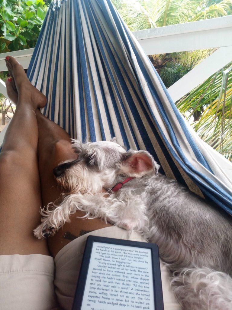 dog and ereader on a hammock