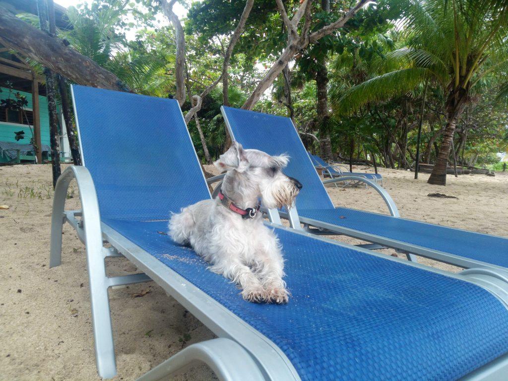 dog sitting on beach chair